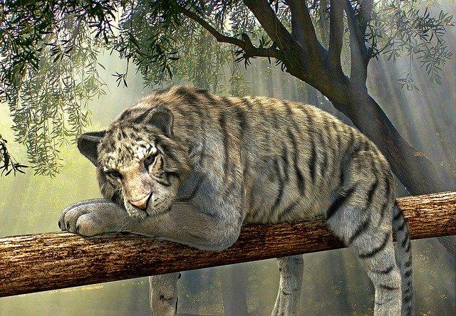 tiger 1098607 640